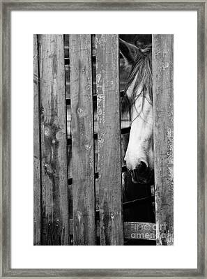 Horse Board 4 Framed Print by Lynda Dawson-Youngclaus