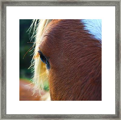Framed Print featuring the photograph Horse Close Up by Jocelyn Friis