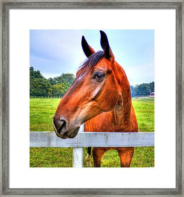 Horse Closeup Framed Print by Jonny D