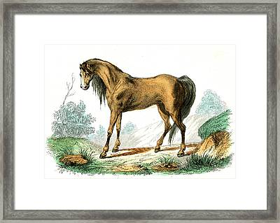 Horse Framed Print by Collection Abecasis