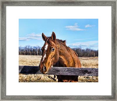 Horse Country Framed Print