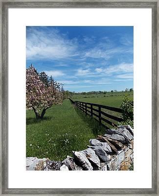 Horse Country Spring Framed Print
