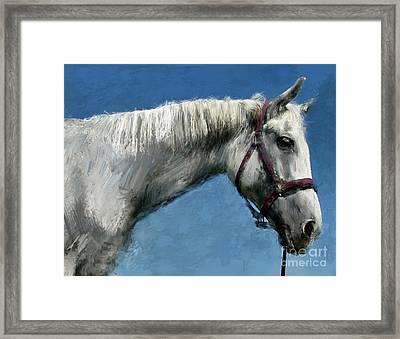Horse  Framed Print by Daliana Pacuraru