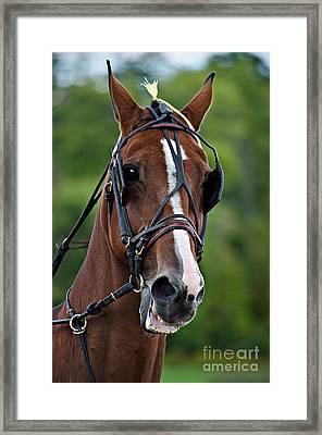 Horse Drawn Pleasure Framed Print