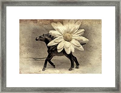 Horse Dream Framed Print