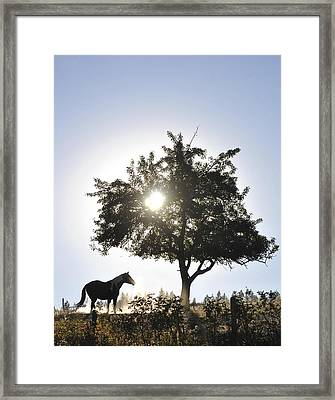Framed Print featuring the photograph Horse Dreaming Under Tree by Michael Dohnalek