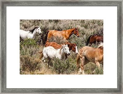 Horse Drive Chaos 2 Framed Print