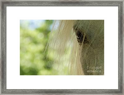 Horse Eye Framed Print by Christine Sponchia