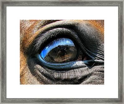 Horse Eye Framed Print by Daliana Pacuraru