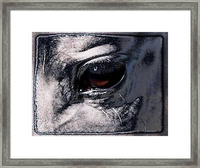 Horse Eye Framed Print by Gun Legler