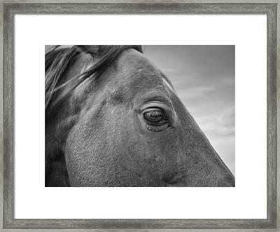 Horse Eye Framed Print by Leland D Howard