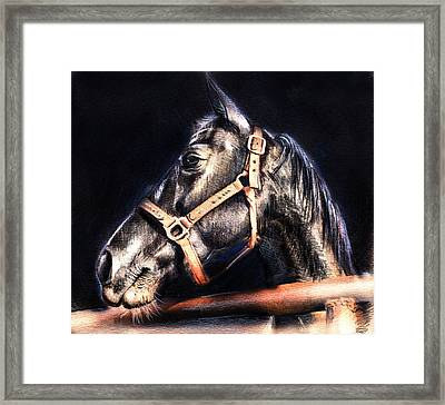 Horse Face - Pencil Drawing Framed Print