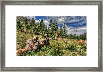 Horse Face Root Framed Print