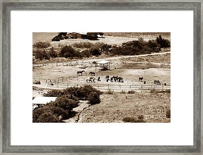 Horse Farm At Kourion Framed Print by John Rizzuto