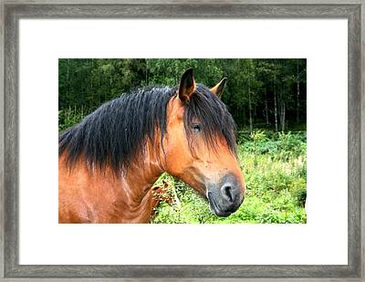 Horse Field Framed Print