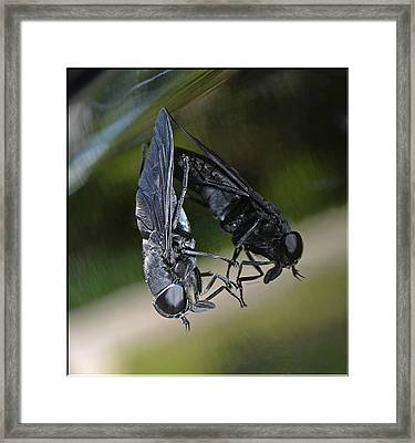 Framed Print featuring the photograph Horse Fly by DigiArt Diaries by Vicky B Fuller