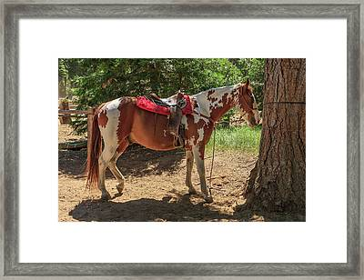 Horse For Rent South Lake Tahoe Framed Print by Tom Norring