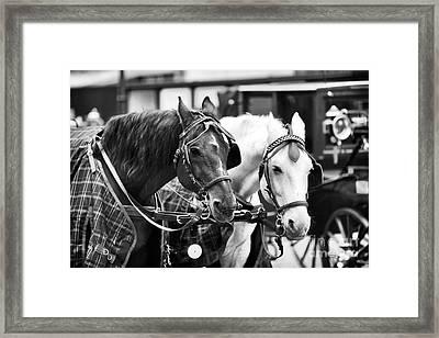 Horse Friends Framed Print by John Rizzuto