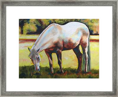 Horse Grazing In The Shade Framed Print