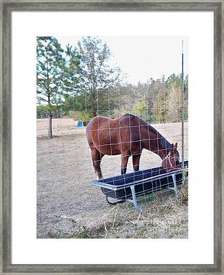Horse Grazing Framed Print by Joseph Baril