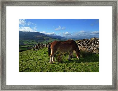 Horse Grazing On Croaghaun Framed Print by Panoramic Images