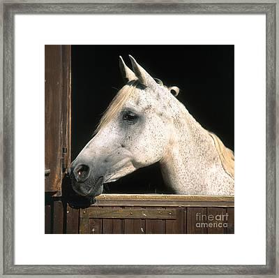 Horse Framed Print by Hans Reinhard