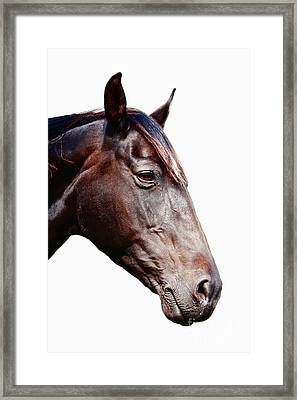 Horse Head Framed Print by Jan Brons