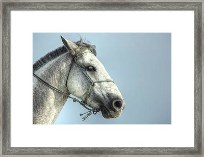 Framed Print featuring the photograph Horse Head-shot by Eti Reid
