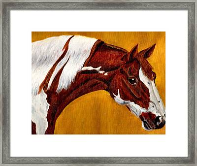 Horse Head Study Framed Print by Joy Reese