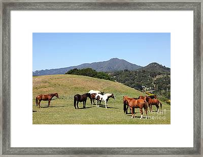 Horse Hill Mill Valley California 5d22672 Framed Print by Wingsdomain Art and Photography