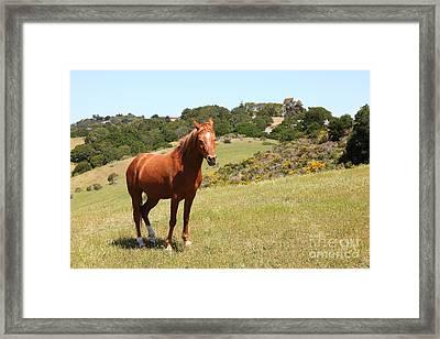 Horse Hill Mill Valley California 5d22679 Framed Print
