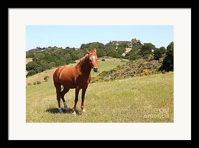 Horse Hill Preserve Framed Prints