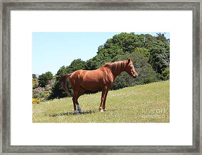 Horse Hill Mill Valley California 5d22683 Framed Print by Wingsdomain Art and Photography