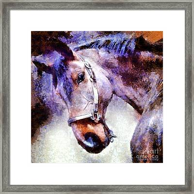 Horse I Will Follow You Framed Print by Janine Riley