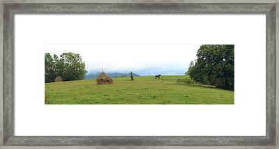 Horse In A Field, Bran, Brasov County Framed Print by Panoramic Images