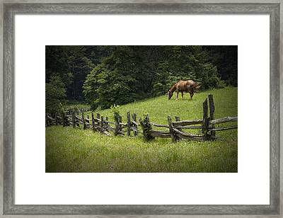 Horse In A Pasture Along The Blue Ridge Parkway Framed Print