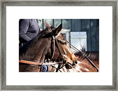 Horse In A Trance Framed Print by Renee Sinatra