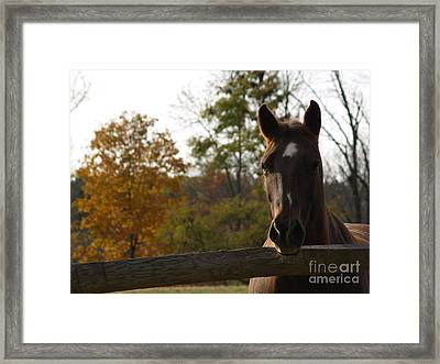 Horse In Autumn Light Framed Print by Anna Lisa Yoder