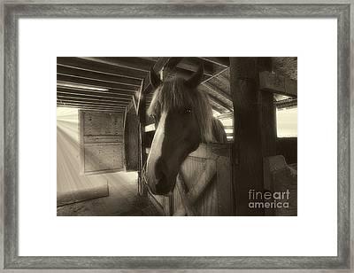 Horse In Barn Stall Framed Print by Dan Friend