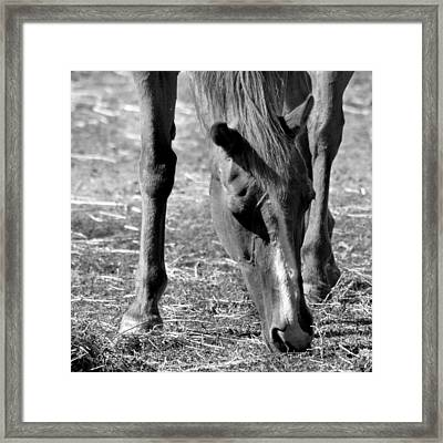 Horse In Black And White Framed Print by Art Block Collections