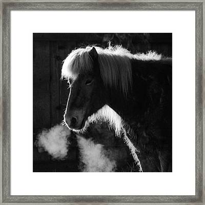 Horse In Black And White Square Format Framed Print