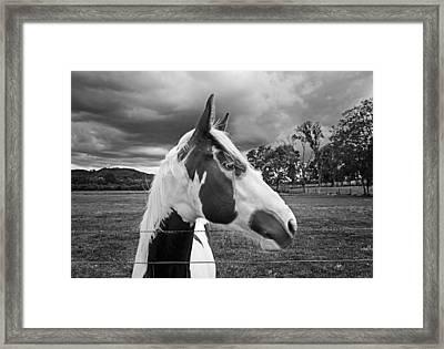 Horse In Black And White Framed Print by Steven  Michael