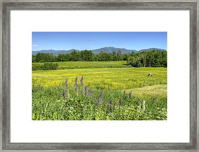 Horse In Buttercup Field Framed Print