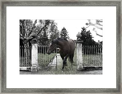 Horse In Europe Framed Print