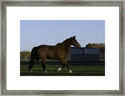 Horse In Field Framed Print by Jason Smith