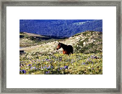 Horse In Mountain Wildflowers Framed Print by Rebecca Adams