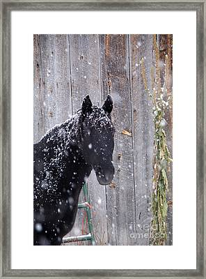 Horse In Snow Framed Print by William Munoz