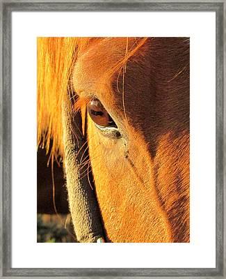 Horse In Sunset Framed Print by Bridget Johnson