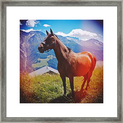 Horse In The Alps Framed Print by Matthias Hauser
