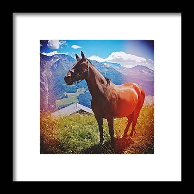 Pferd Framed Prints